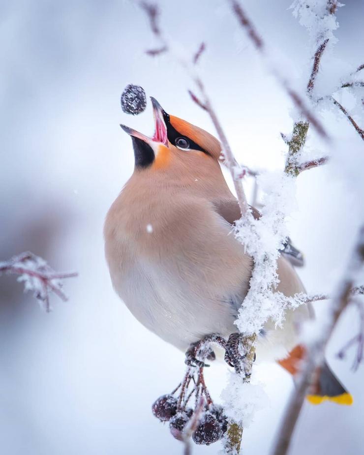 Красота зимней Финляндии на снимках Юкка Рисикко (24 фото)