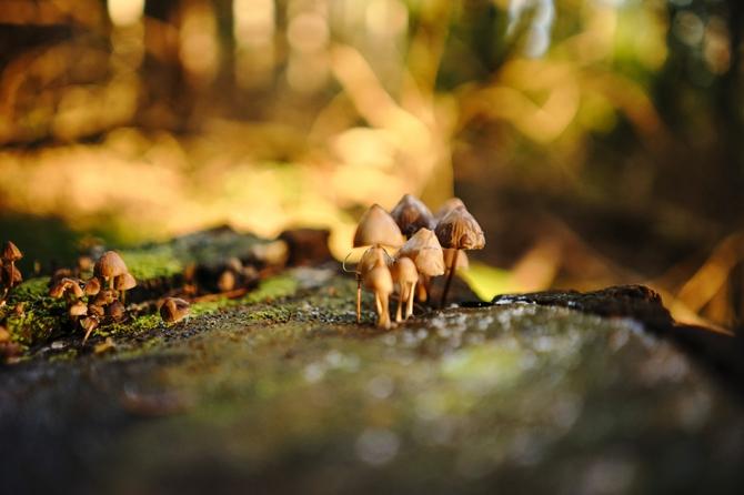 В США мужчина вколол себе отвар галлюциногенных грибов и едва не умер  они в нем проросли!