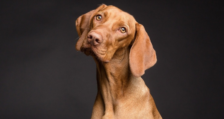 США запретят собакам въезд в страну. Но не всем