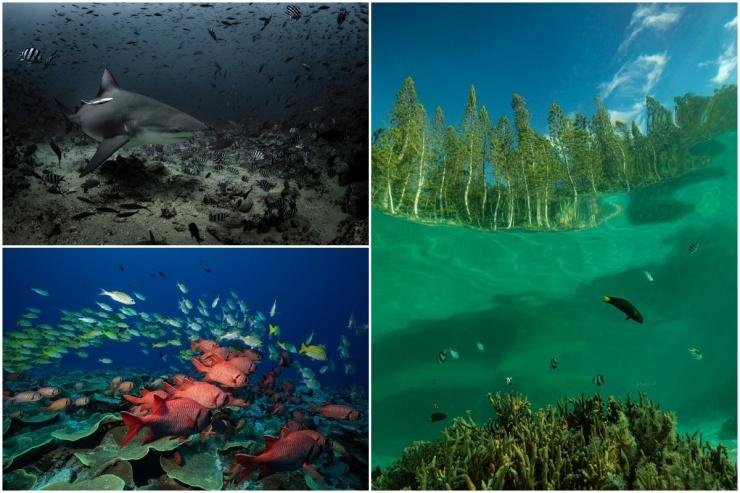 Удивительный подводный мир на снимках Жасмин Кэри (25 фото)