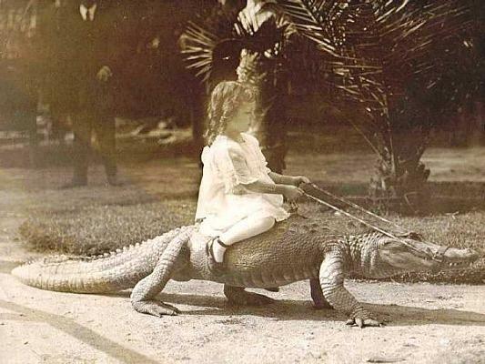 Пугающе очаровательно фото детей верхом на аллигаторах