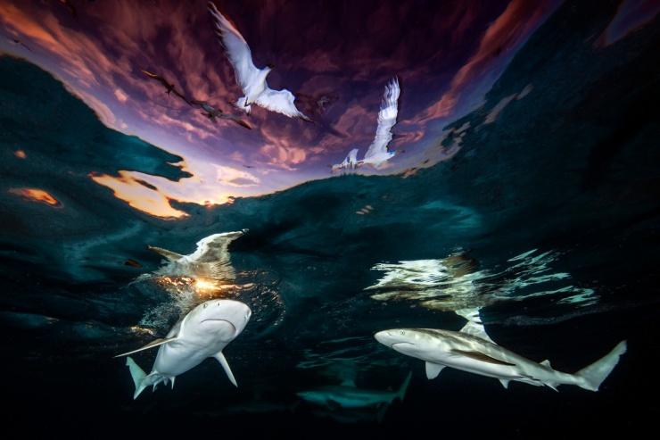 Лучшие работы конкурса подводной фотографии 2021 года