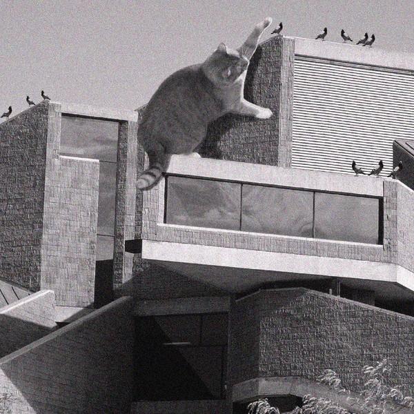 Кошки брутализма кто и зачем фотошопит домашних животных к постройкам (странная галерея)