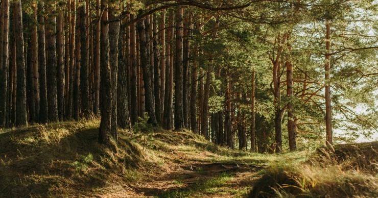 Прогулка в лесу снимает связанный с работой стресс