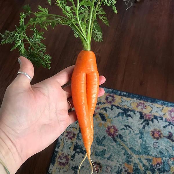 Галерея невероятно эротичных морковок (21 фото)