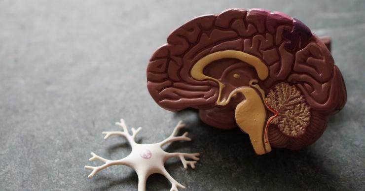Правда ли, что нервные клетки не восстанавливаются