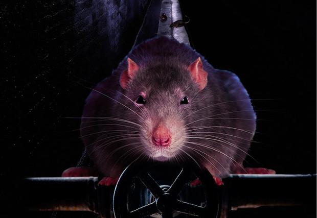 Серое существо. Все, что ты хотел знать о крысах, но не додумывался спросить (7 фото)
