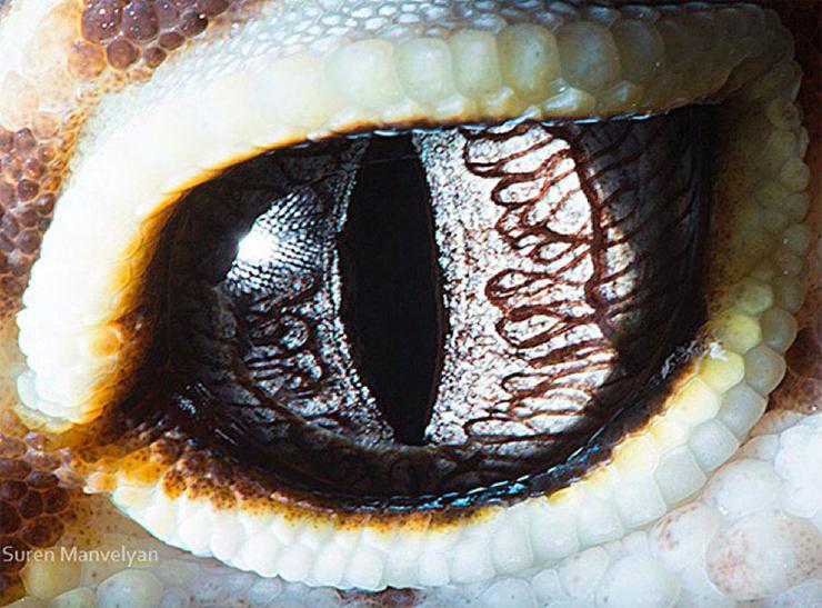 Фотографии глаз животных