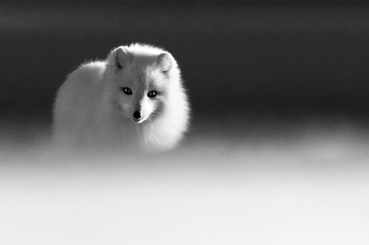 Замечательные черно-белые фото животных Марко Ронкони