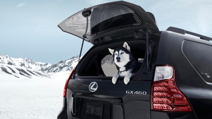 Лучше новых двух. Lexus GX460 как воплощение идеального олдскула