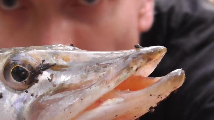 Рыбалка. ЩУКА любит ЭТО! Ловля щуки на живца поплавочной удочкой │ видео