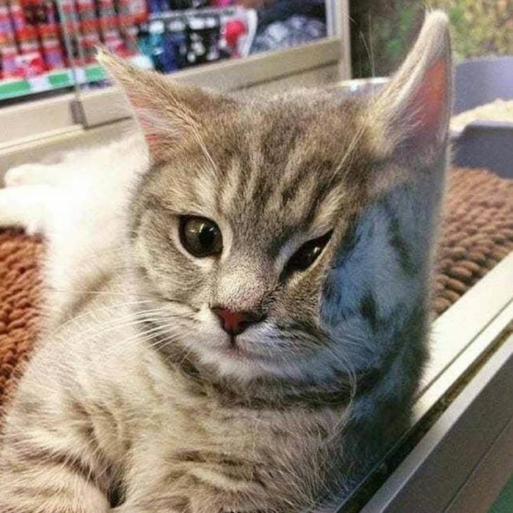 Художник из Индонезии перерисовывает мемные фотографии котов, превращая их в незаконно смешные рисунки