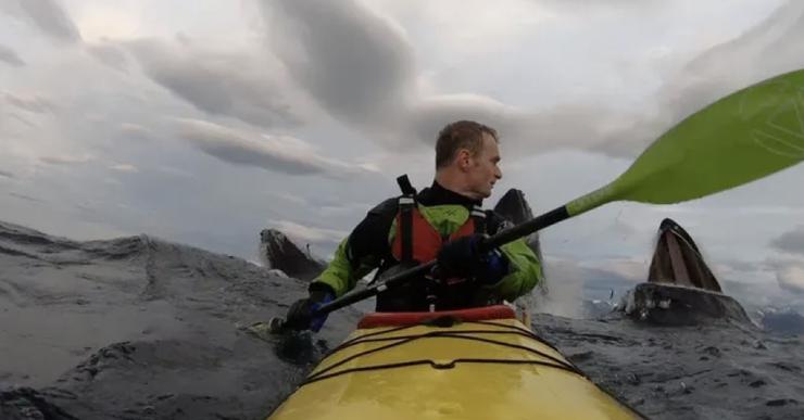 Как три кита перепугали каякера: видео