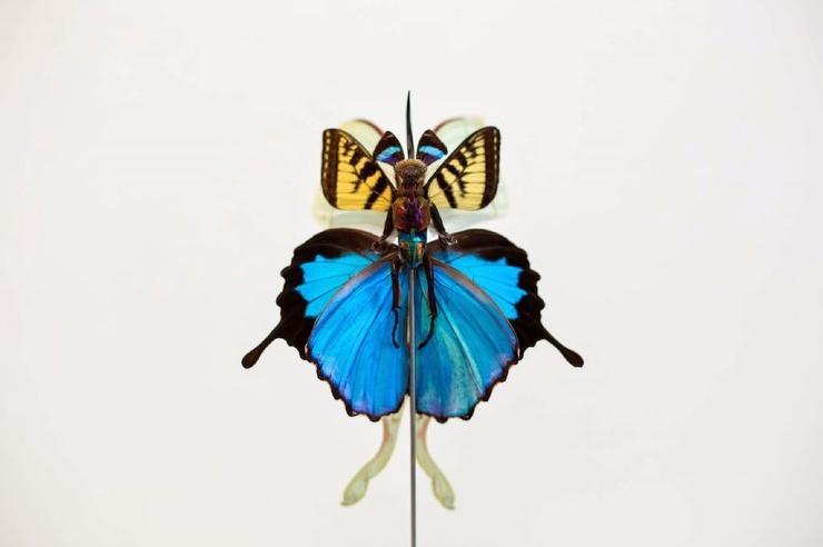 Криповая магия: художник делает фей из мертвых насекомых