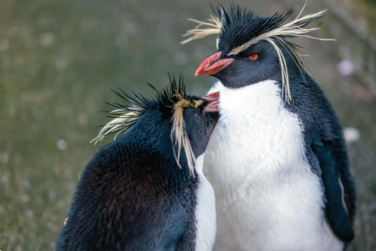 Затонувшая родина пингвинов