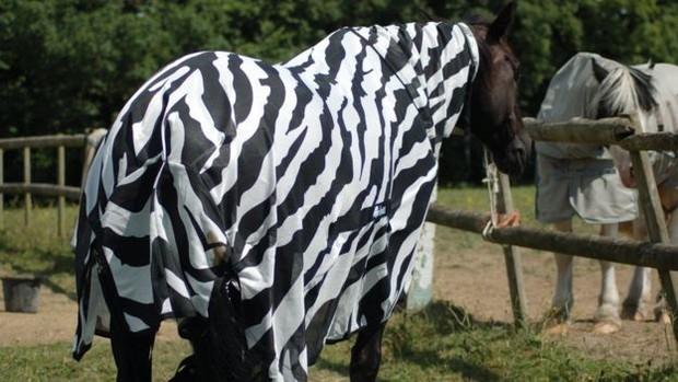 Ученые наконец разгадали, зачем зебрам полоски