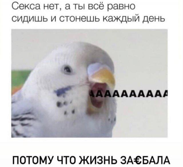 Шутки и мемы из Сети (02/06/2021)