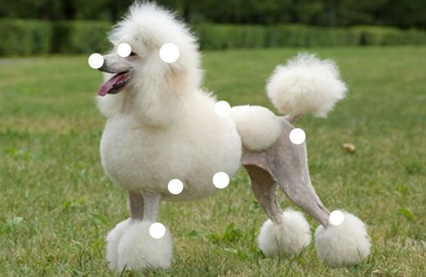 Как защититься от собаки