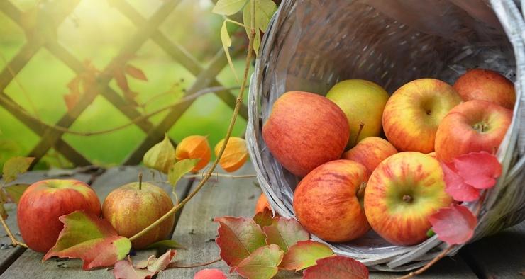 Действительно ли одно гнилое яблоко может испортить всю корзину