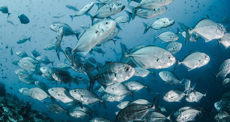 Есть ли у рыб обоняние