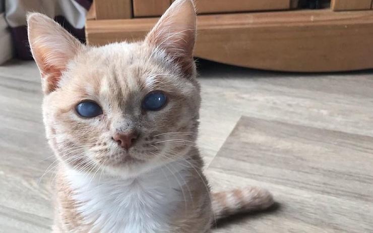 Помните кота из «Кладбища домашних животных» Стивена Кинга? Кажется, у него появился настоящий двойник