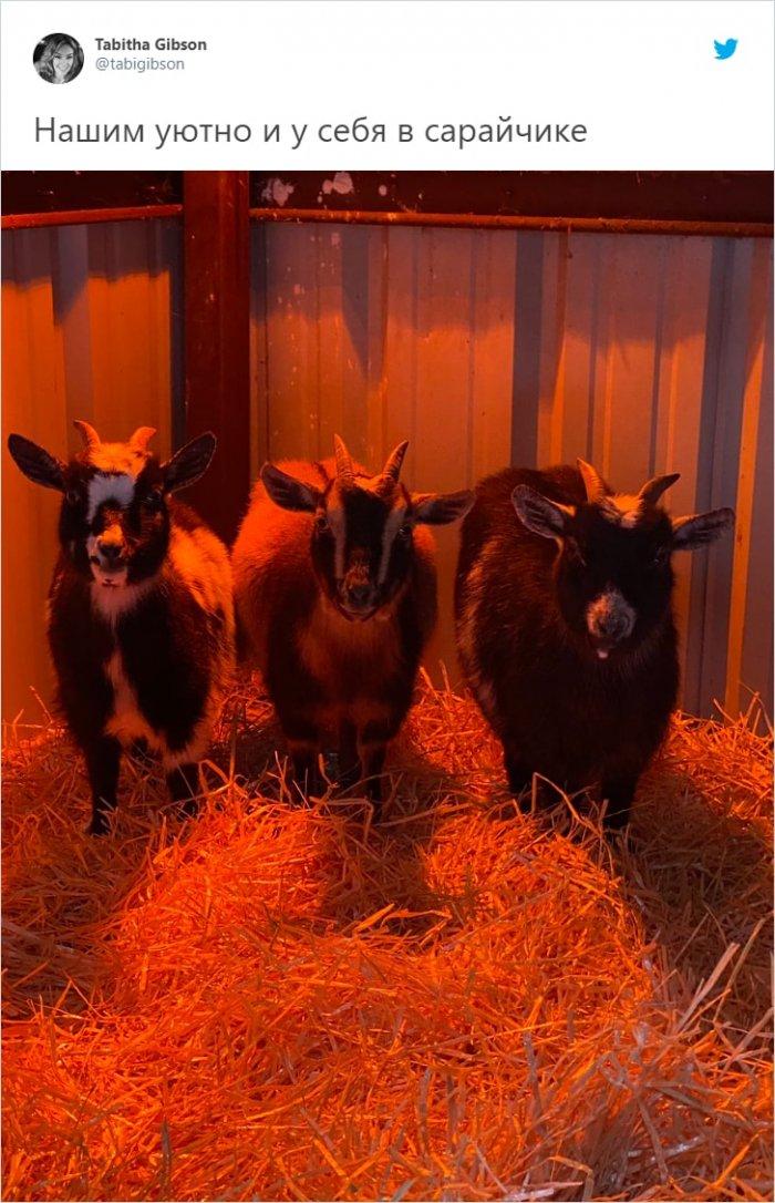 Из-за экстремального холода в Техасе люди отогревают животных в своих домах