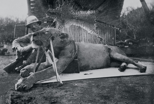 Кровожадная история самого знаменитого в истории противостояния между человеком и львом
