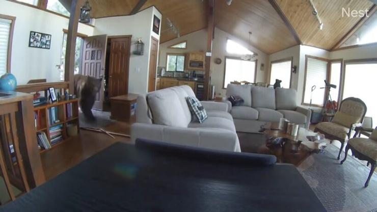 Видео: Медведь стучится в дверь, а после выбивает ее и входит в дом без приглашения