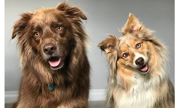 Почему собака наклоняет голову, когда ты с ней разговариваешь